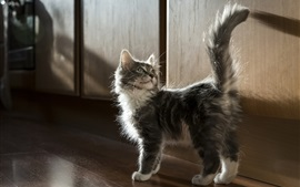 Preview wallpaper Furry kitten, tail