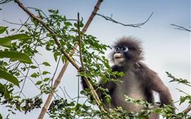 Macaco peludo, árvore, folhas