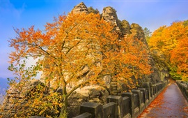Germany, Bastei, bridge, trees, yellow leaves, autumn