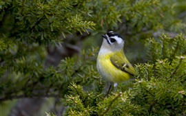 Зеленая птица пера, дерево, ветки