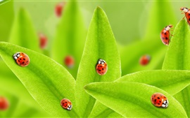 Preview wallpaper Green leaves, many ladybugs