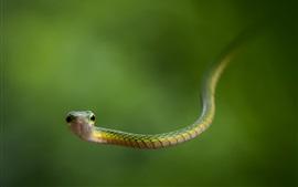 Serpiente verde y fondo verde
