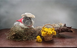 Preview wallpaper Guinea pig, dandelions flowers, hat, humor
