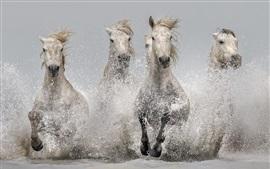 Лошади, бегущие в воде, брызги, река
