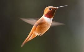 Preview wallpaper Hummingbird flight, speed, wings
