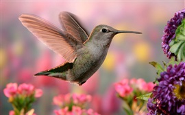 Hummingbird flight, wings, pink and purple flowers