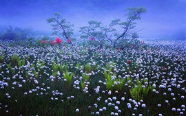 Japan, fog, haze, morning, white wildflowers