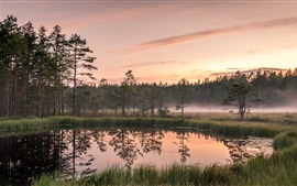 Lake, trees, fog, grass, dawn