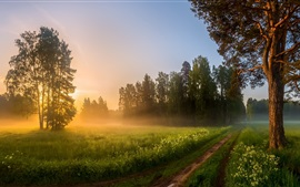 Morning, fields, trees, path, fog, sunrise