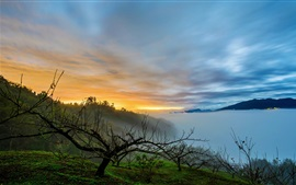 Morning, fog, trees, sunrise, lake, clouds