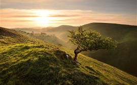 Morning, slope, tree, grass, green, sunrise