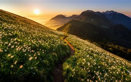 Preview wallpaper Mountains, orchid, flowers, slope, sunrise