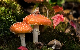 Orange mushroom, frog, red leaves
