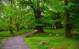 Park, trees, green, path, lamp, summer