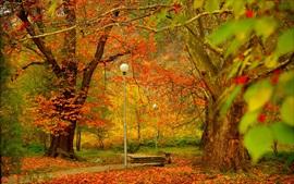 Parque, árboles, lámparas, otoño