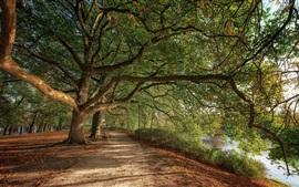 Parque, árvores, rio, cerca, folhas