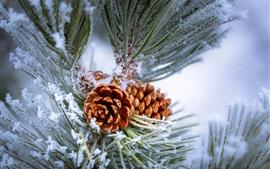 미리보기 배경 화면 소나무, 나뭇 가지, 서리, 겨울