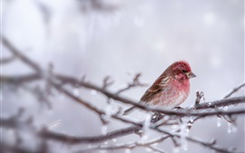Preview wallpaper Pink feather bird, twigs, ice, winter