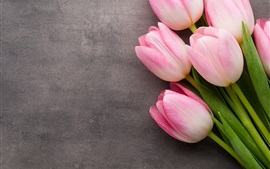 Pink fresh tulips, gray background