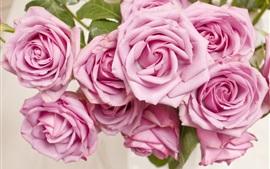 미리보기 배경 화면 핑크 장미, 꽃, 꽃잎