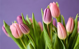 Preview wallpaper Pink tulips, bouquet, purple background