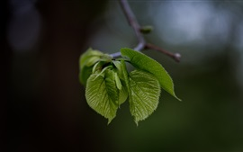 Plants, green leaves, bokeh