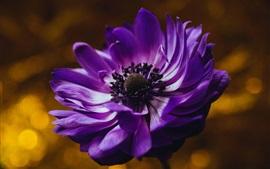 Aperçu fond d'écran Fleur pourpre, pétales