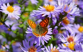 Purple flowers, butterfly, petals