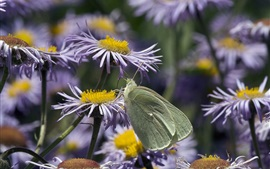 Preview wallpaper Purple flowers, gray butterfly