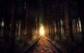 Железная дорога, деревья, лес, свет