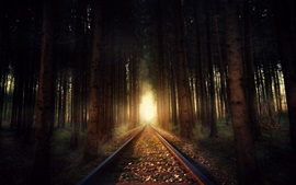 Ferrocarril, árboles, bosque, luz