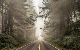 Preview wallpaper Road, forest, light rays, speed