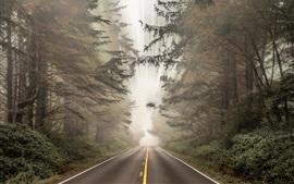Дорога, лес, световые лучи, скорость