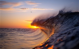 Sea waves, splash, bird, sunset