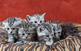 Six kittens, cubs