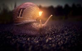 Caracol, casa, lâmpada, imagem criativa