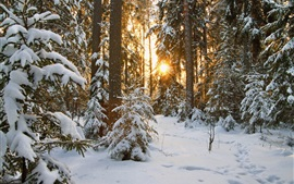 Nieve, árboles, sol, invierno