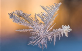 Preview wallpaper Snowflake macro photography, frost