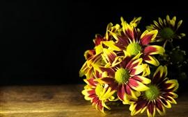미리보기 배경 화면 일부 국화, 꽃