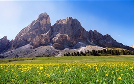 Preview wallpaper South Tyrol, Italy, mountains, yellow flowers, summer