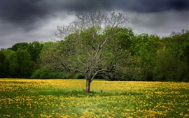 Spring, wildflowers, tree, clouds