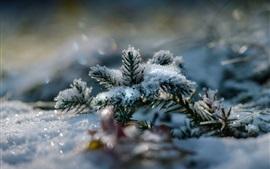 小枝、雪、冬