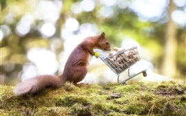 Preview wallpaper Squirrel, peanut, shopping cart, funny animal