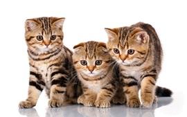 Três gatinhos fofos, fundo branco