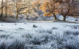 Trees, grass, frost, autumn