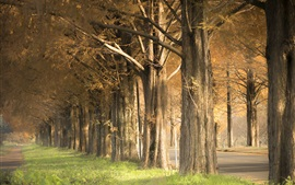 Trees, grass, road, autumn