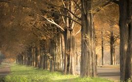 Árvores, grama, estrada, outono