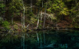 나무, 호수, 핀란드