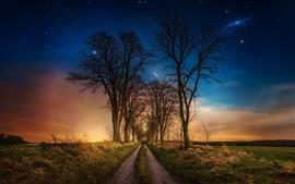 Árboles, camino, hierba, luna, estrellas, noche
