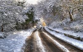 Деревья, дорога, снег, зима